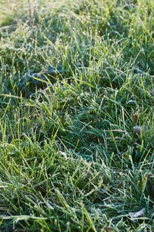 Free Frozen Grass Stock Photography - 5993062
