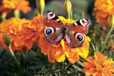 Free Butterfly Stock Photos - 5993163