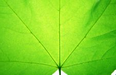 Free Leaf On A Gleam Stock Images - 5993234