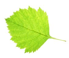 Free Leaf On A Gleam Stock Photos - 5993243