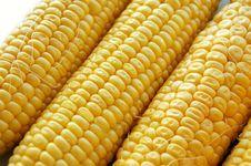 Free Corn Stock Photos - 5993373