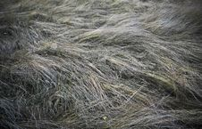 Free Dry Grass Stock Images - 5994324