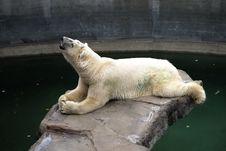Free Polar Bear Lying Above Water Royalty Free Stock Image - 5994366