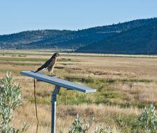 Free Hawk On Solar Panel Stock Photo - 5994850