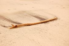 Free Drift Wood Stock Photo - 5994910