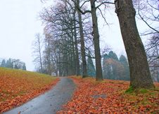 Autumn, Rain, Leaves And Road Royalty Free Stock Image