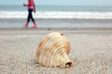 Free Sea Shell And Silhouette Stock Images - 5994994