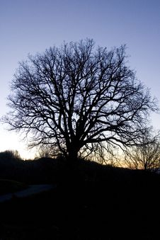 Free Sunset Tree Stock Images - 5996464