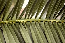 Free Palm Tree Leafs Royalty Free Stock Photo - 5996475