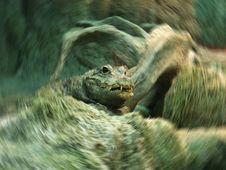 Free Crocodile Stock Image - 5996511