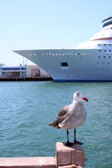 Free A Bird In Front Of A Cruise Ship Royalty Free Stock Image - 5996776