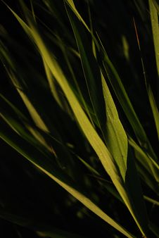 Free Grass Dew Royalty Free Stock Photography - 5997247
