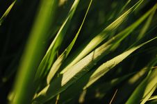 Free Grass Dew Stock Photos - 5997363