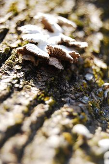 Free Fungus Royalty Free Stock Image - 5998936