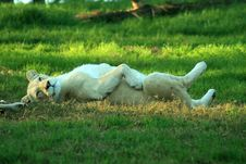 Free Lazy Lioness Stock Photography - 5999292