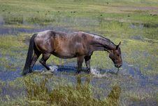 Free Horse Stock Image - 5999751