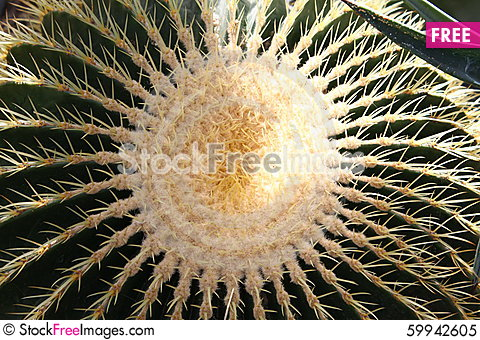 Free Close Up Of An Cactus Royalty Free Stock Photo - 59942605