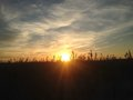 Free Phragmites Grass During Sunset On Nickerson Beach. Royalty Free Stock Images - 59958379