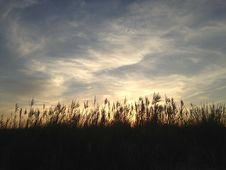 Phragmites Grass During Sunset On Nickerson Beach. Stock Photo