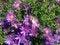 Free A Bee On A Daisy Aster Flower On Long Beach, Long Island. Royalty Free Stock Photos - 59958368