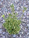 Free Plant In Between Pebbles Royalty Free Stock Photography - 65257