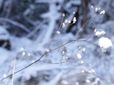 Free Frozen Branch Background Stock Photography - 60662