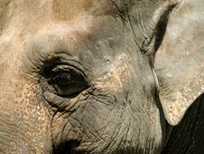 Free Elephant Eye Stock Photo - 60820