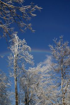 Free Ice Covered Trees With Rainbow Royalty Free Stock Images - 60969