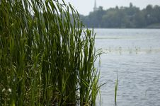 Free Reeds By The Lake Royalty Free Stock Image - 62136