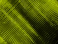 Free Green Tinted Cds Stock Image - 62691