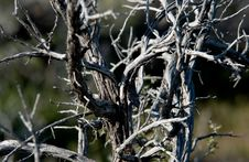Free Branches Stock Photo - 62930