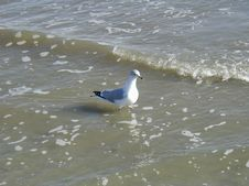 Bird On Water Stock Images