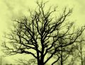 Free Tree Silhuette Sepia Stock Photo - 600060
