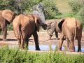 Free Elephants Playing At Waterhole Stock Photos - 601533