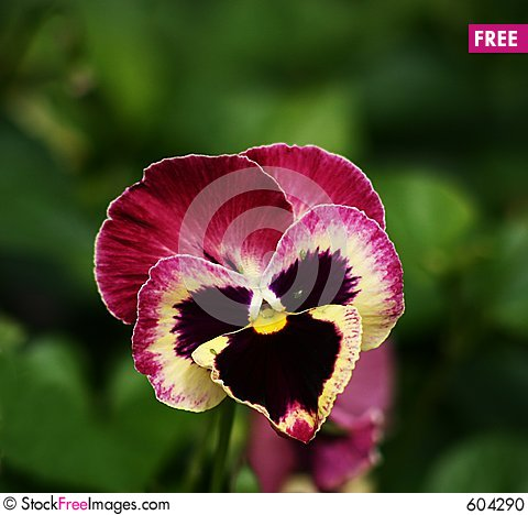 Free Orchid With Aphids Stock Photo - 604290