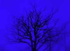 Free Tree Silhouette Blue Royalty Free Stock Photos - 600058