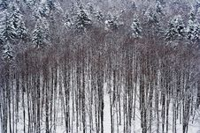 Free Late Winter Forest Stock Photos - 601953