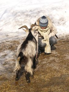 Free Goat Feeding Stock Photo - 602210