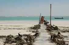 Free Discovery Zanzibar. Stock Photo - 602290