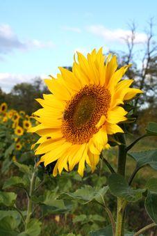 Free Towards The Sun. Royalty Free Stock Image - 603026