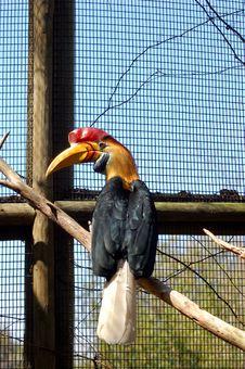 Free Hornbill Stock Photo - 603150