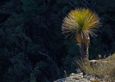 Free Grass Tree Royalty Free Stock Photo - 603345