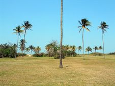 Free Coconuts Landscape Royalty Free Stock Photos - 603448