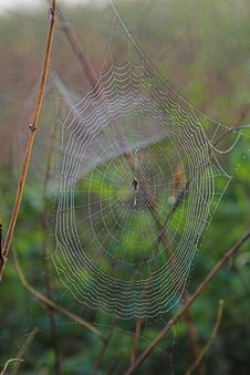 Free Spider Web Stock Image - 603791
