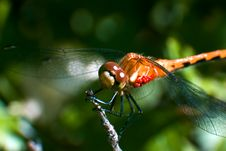 Free Damselfly Stock Photography - 606882