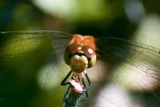 Free Damselfly Stock Images - 606884
