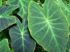 Free Plant4 Stock Image - 607801