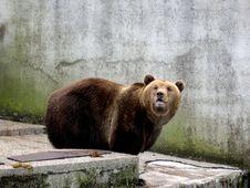 Free BEAR Stock Image - 608051
