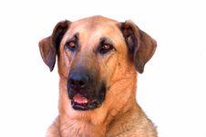 Free Stock Dog 3 Stock Photo - 608090