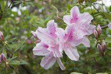 Free Spring Blooms Royalty Free Stock Image - 609576